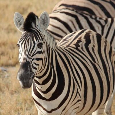 Como é o safari no Etosha National Park
