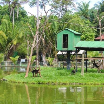 Zoológico do CIGS – Manaus